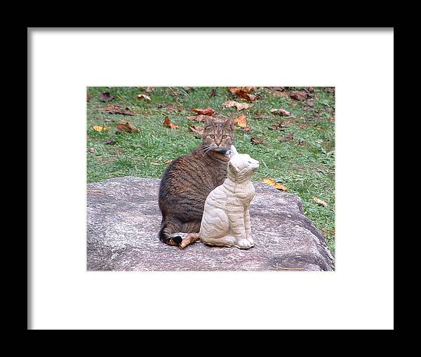 Animals Framed Print featuring the photograph Who Is My New Friend by Margaret G Calenda