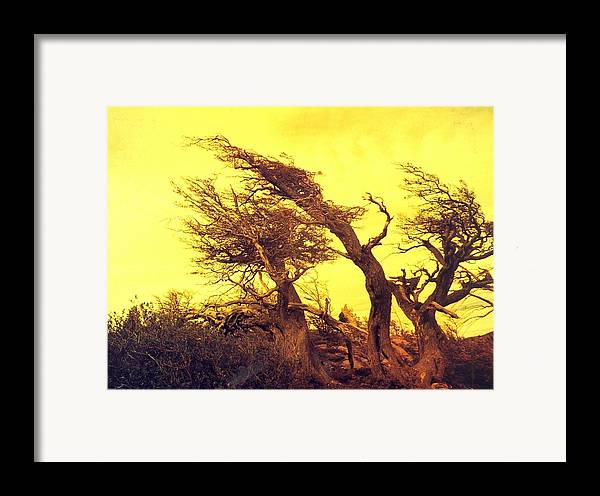 Trees Framed Print featuring the photograph Wicked Trees by Linda Russell