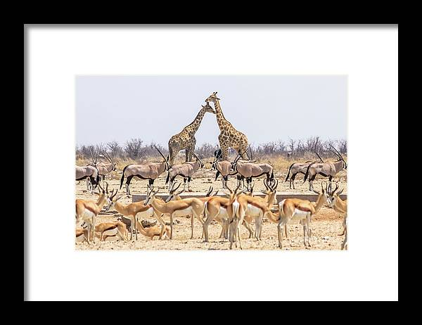 Namibia Framed Print featuring the photograph Wild Animals Pyramid by Benny Marty