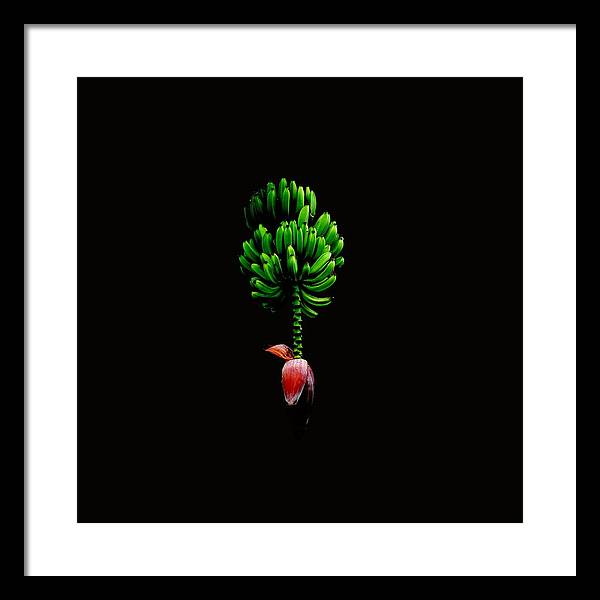 Banana Print Framed Print featuring the photograph Wild Banana Bunch With Flower Color by Kathy Daxon