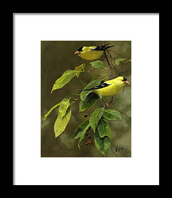 American Goldfinch Framed Print featuring the painting Wild Cherries And Wild Canaries by Ed Yanok