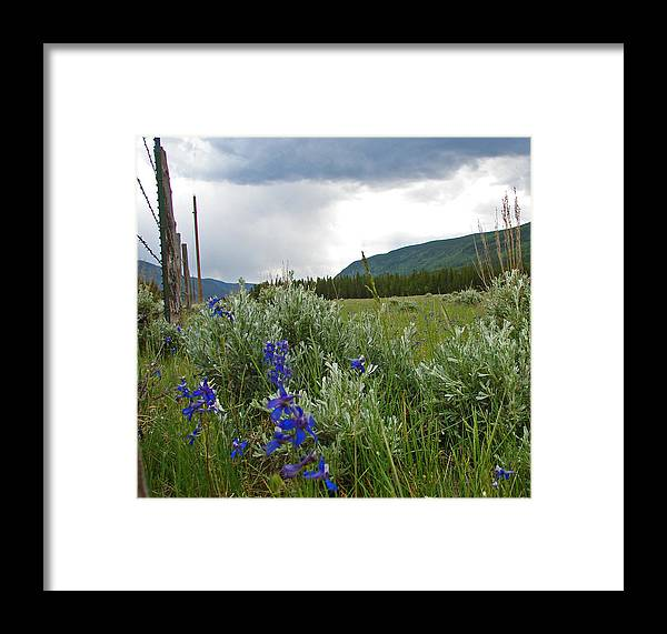 Wild Flowers Framed Print featuring the photograph Wild Delphinium by Heather Coen