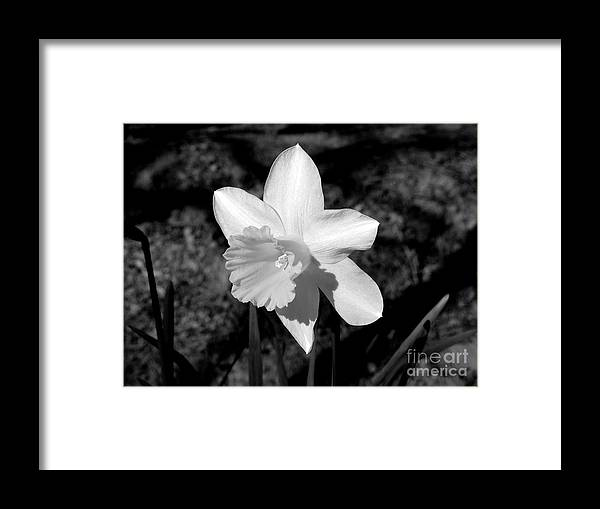 Flower Framed Print featuring the photograph Wild Flower Oklahoma by Mark Grayden