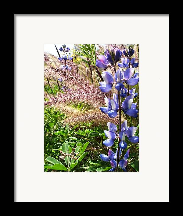 Flower Framed Print featuring the photograph Wild Flower by Shari Chavira
