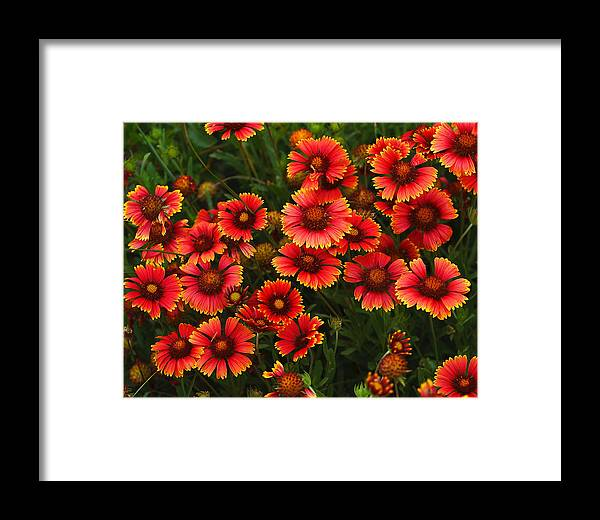Summer Framed Print featuring the photograph Wild Flowers In Field Color Art Print by Randy Steele