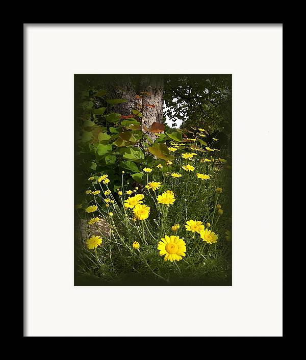 Flower Framed Print featuring the photograph Wild Flowers by Jim Darnall