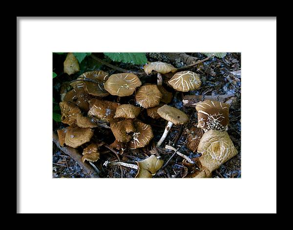 Botany Framed Print featuring the photograph Wild Forest Mushroom Patch by Sonja Anderson