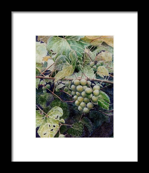 Green Framed Print featuring the painting Wild Grapes by Constance Drescher
