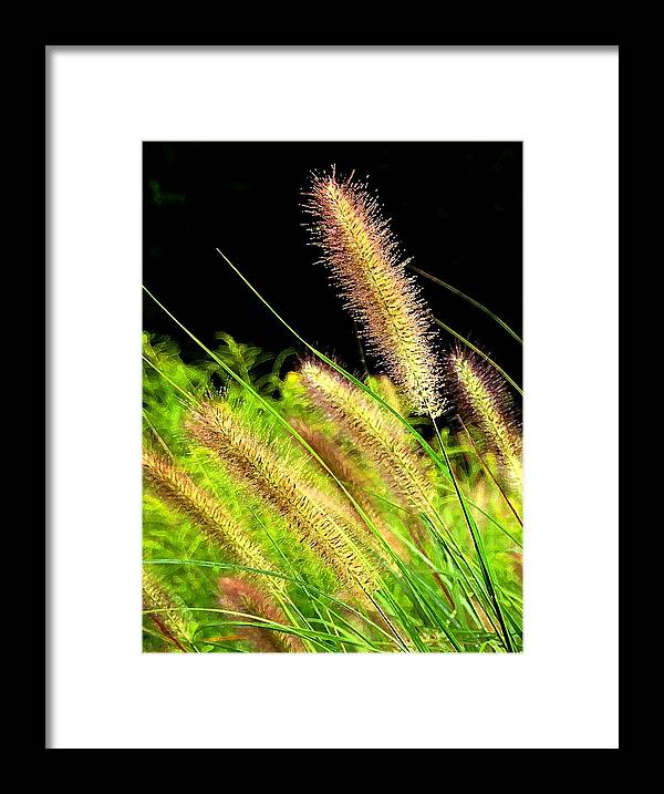 Nature Framed Print featuring the photograph Wild Grass by Jim Darnall