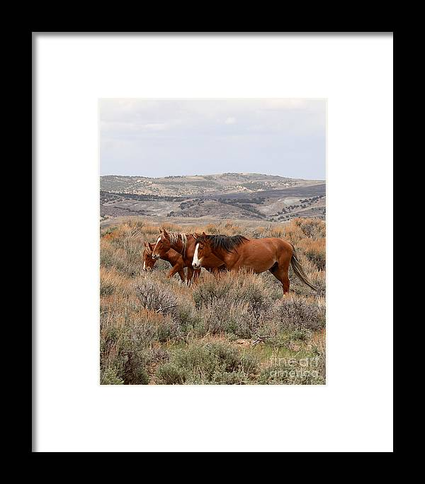 Horse Framed Print featuring the photograph Wild Horse Trio by Max Allen