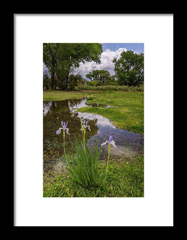Flowers Framed Print featuring the photograph Wild Iris by Cat Connor