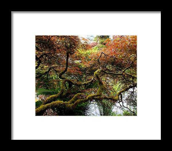 Botany Framed Print featuring the photograph Wild Japanese Maple by Sonja Anderson