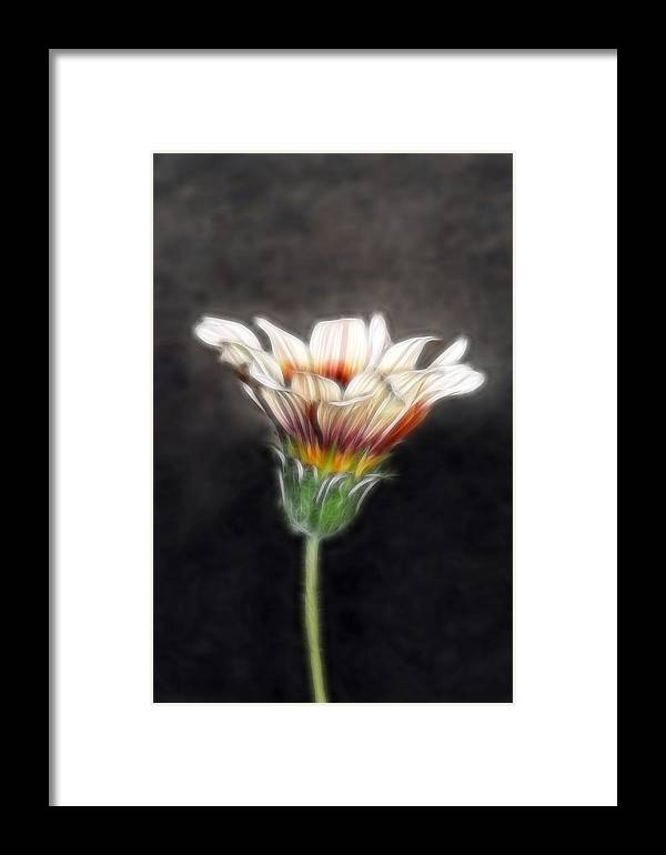 Wild Flowers Framed Print featuring the photograph Wild Petal Dreams by Lesley Smitheringale