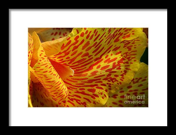 Canna Framed Print featuring the photograph Wild Petals by Jeannie Burleson
