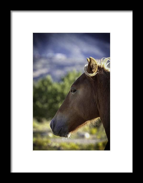 Horse Framed Print featuring the photograph Wild Profile by Elizabeth Eldridge