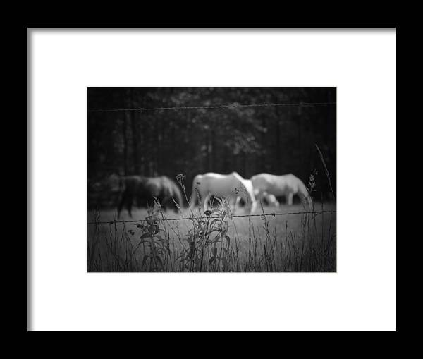 Horses Framed Print featuring the photograph Wild Restraint by Jessica Burgett