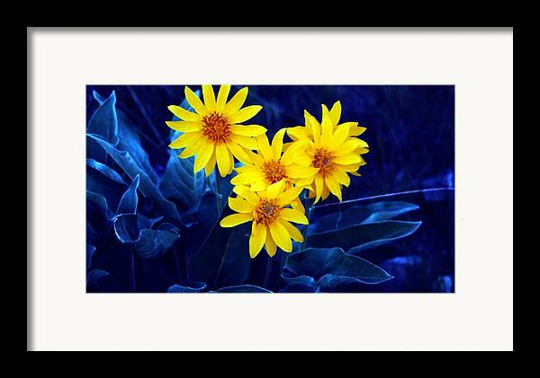 Sunflowers Framed Print featuring the photograph Wild Sunflowers by Tiffany Vest