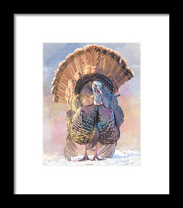 Bird Framed Print featuring the photograph Wild Tom Turkey by Patti Deters
