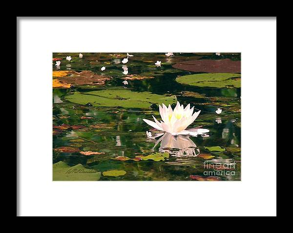 Water Lilly Framed Print featuring the photograph Wild Water Lilly by Patricia L Davidson