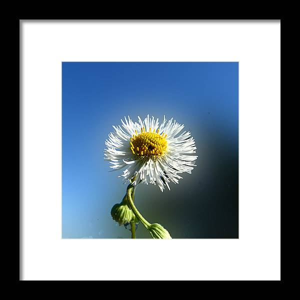 Botanica Framed Print featuring the photograph Wildflower In The Wind 209 by David Houston