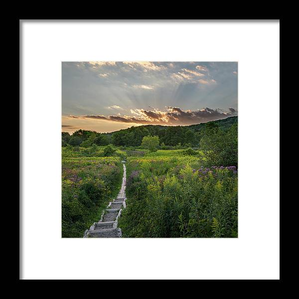 Square Framed Print featuring the photograph Wildflower Sunset 2016 Square by Bill Wakeley