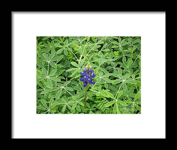 Nature Framed Print featuring the photograph Wildflowers - All Alone And Blue by Lucyna A M Green