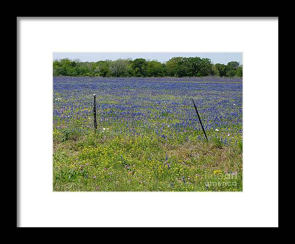 Nature Framed Print featuring the photograph Wildflowers - Blue Horizon by Lucyna A M Green