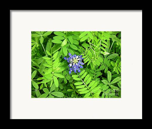 Nature Framed Print featuring the photograph Wildflowers - Protective Detail by Lucyna A M Green