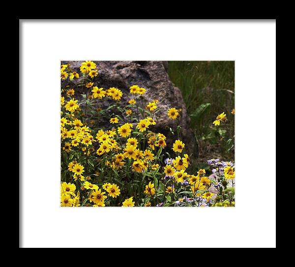 Flowers Framed Print featuring the photograph Wildflowers Honoring Mary Jabens by Judy Schneider