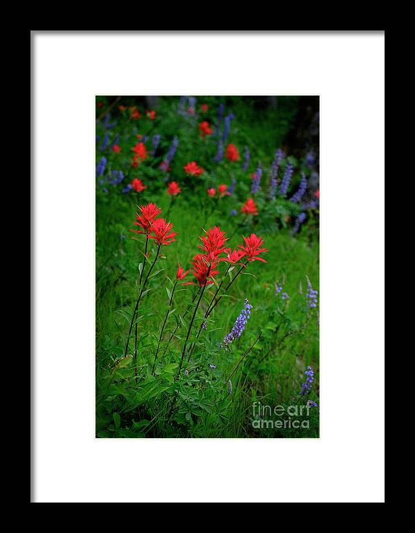 Agriculture Framed Print featuring the photograph Wildflowers In Mountains Wilderness by Lane Erickson