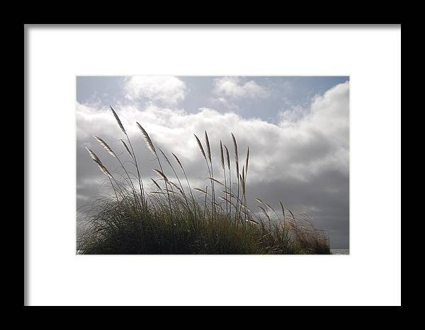 Wildgrass Framed Print featuring the photograph Wildgrass by Jean Booth