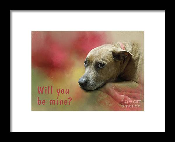 Will Framed Print featuring the photograph Will You Be Mine? by Renee Trenholm
