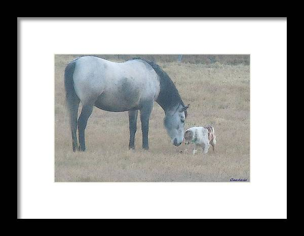 Framed Print featuring the photograph Will You Play With Me by Anastasia Savage Ealy