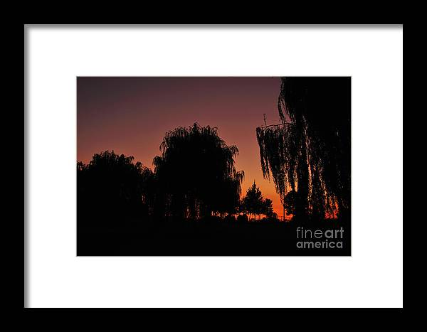 Leaves Framed Print featuring the photograph Willow Tree Silhouettes by Joe Ng