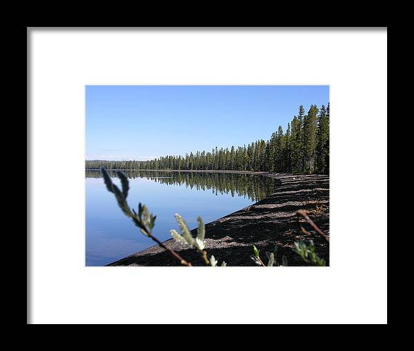 Willows Framed Print featuring the photograph Willows by Mel Crist