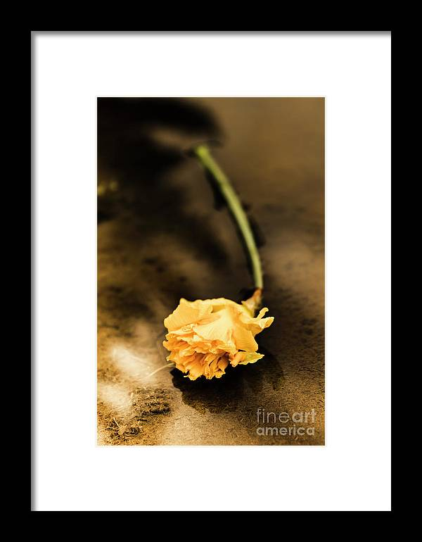 Flower Framed Print featuring the photograph Wilting Puddle Flower by Jorgo Photography - Wall Art Gallery