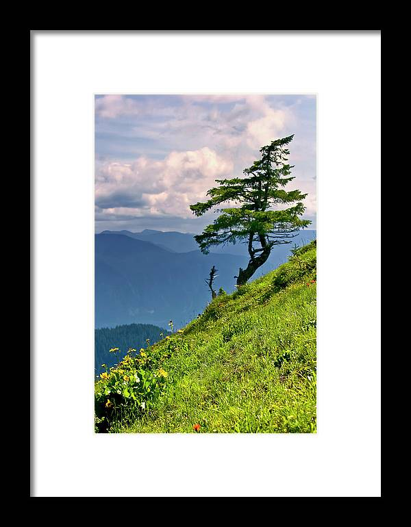 Northwest Mountains Framed Print featuring the photograph Wind Sculpted Conifer by Albert Seger