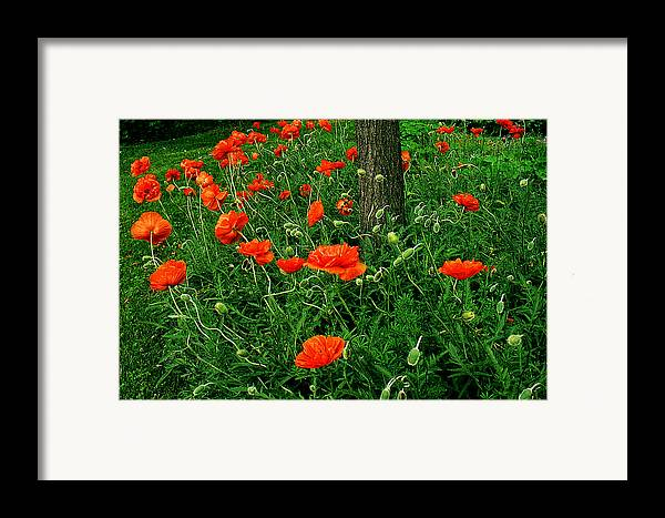 Flowers Framed Print featuring the photograph Windblown Poppies by Roger Soule