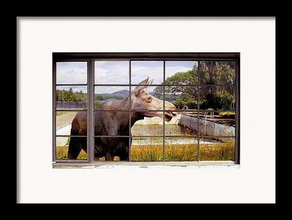 Moose Framed Print featuring the photograph Window - Moosehead Lake by Peter J Sucy