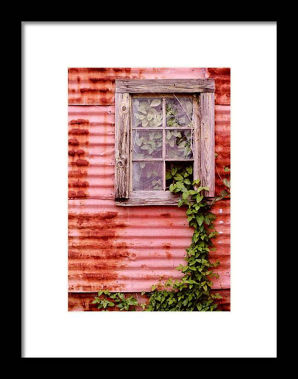 Window Framed Print featuring the photograph Window Of Ivy by Andrew Giovinazzo