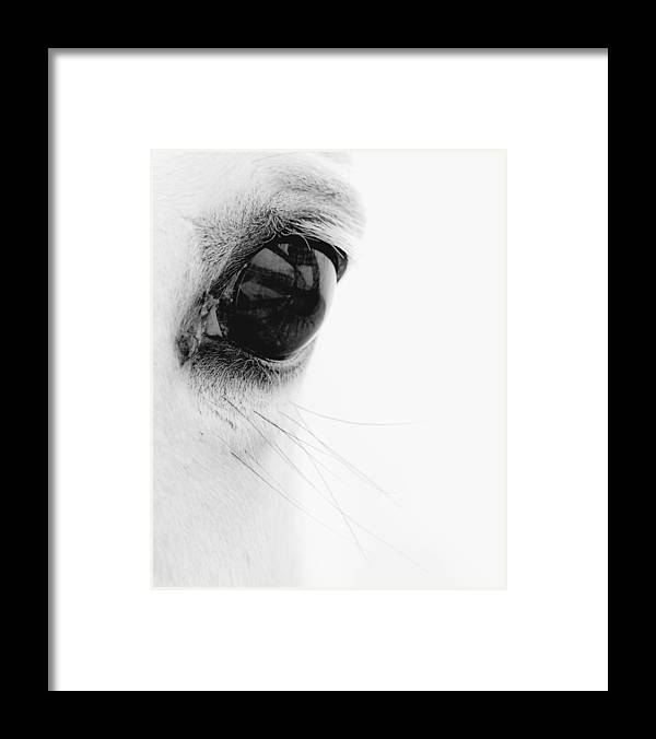 Animal Framed Print featuring the photograph Window to the Soul by Ron McGinnis