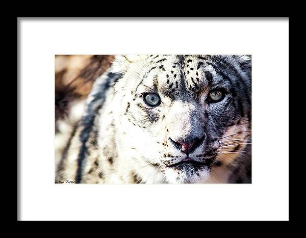 Photography Framed Print featuring the photograph Windows To The Soul by Katya Rosien