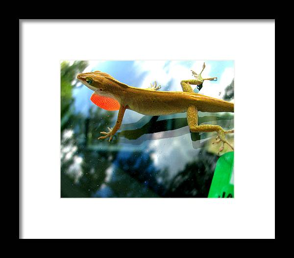 Lizard Framed Print featuring the photograph Windshield Walker by Lindsey Orlando