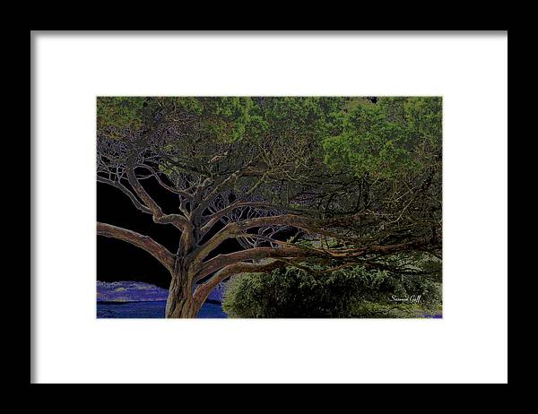 Tree Framed Print featuring the photograph Windswept Dreams by Suzanne Gaff