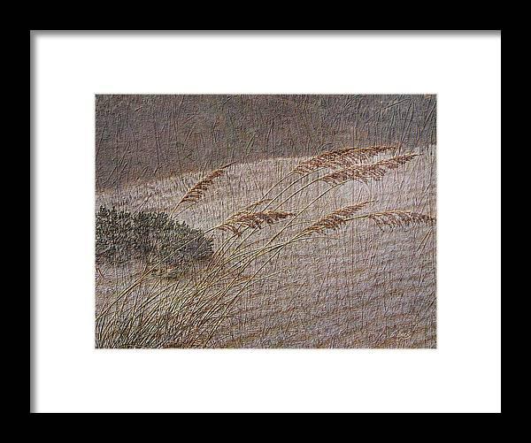 Beach Sea Oats Sand Botany Botanical Stormy Windy Gordon Beck Art Framed Print featuring the photograph Windswept by Gordon Beck