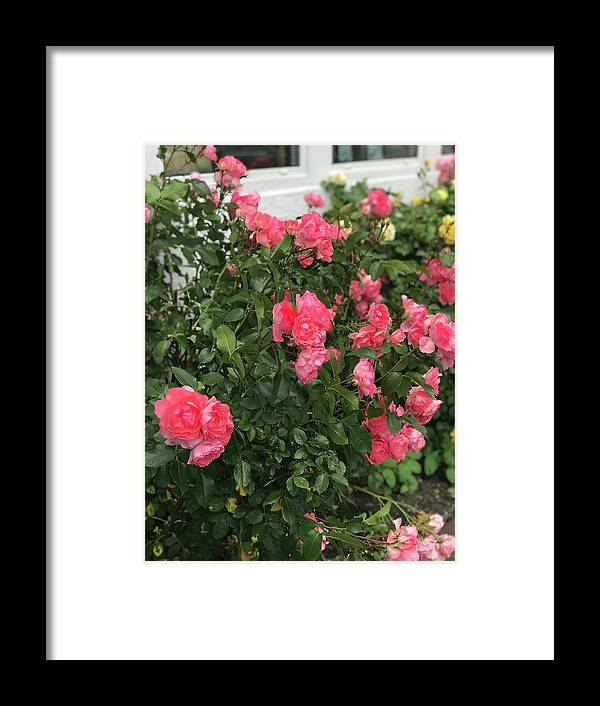 Roses Framed Print featuring the photograph Winery Roses by Jennifer Stark
