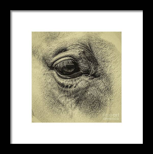 Eye Horse Framed Print featuring the photograph Wink by Catherine Balfe