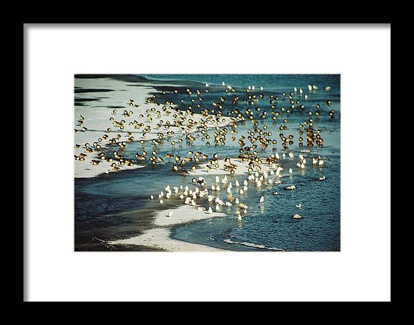 Ice Framed Print featuring the photograph Winter Abstraction by Jennifer Trone