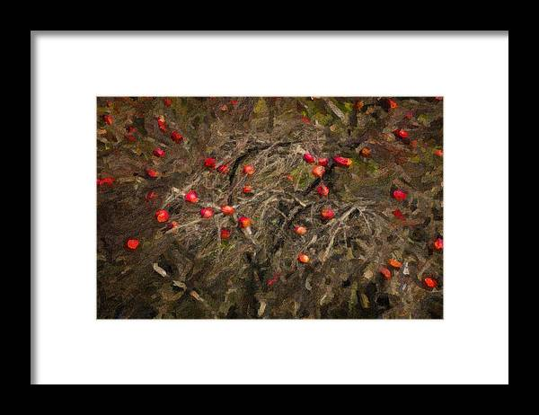 Maine Lobster Boats Framed Print featuring the photograph Winter Apple Abstract by Tom Singleton