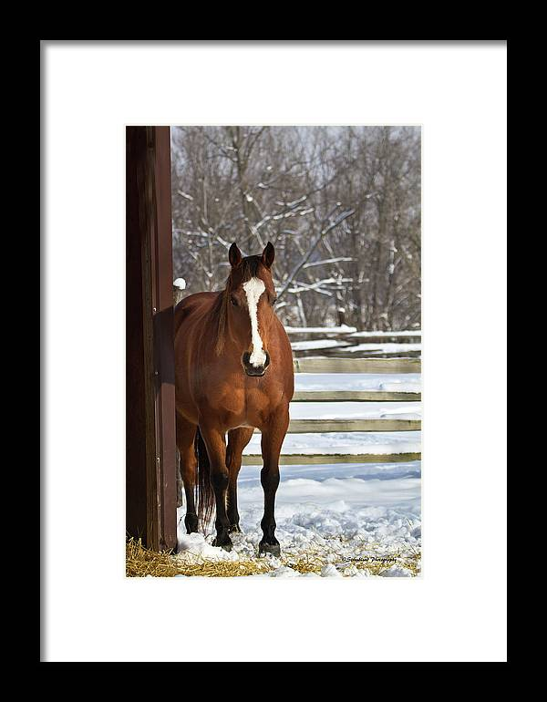 Winter Framed Print featuring the photograph Winter At The Barn by Straublund Photography